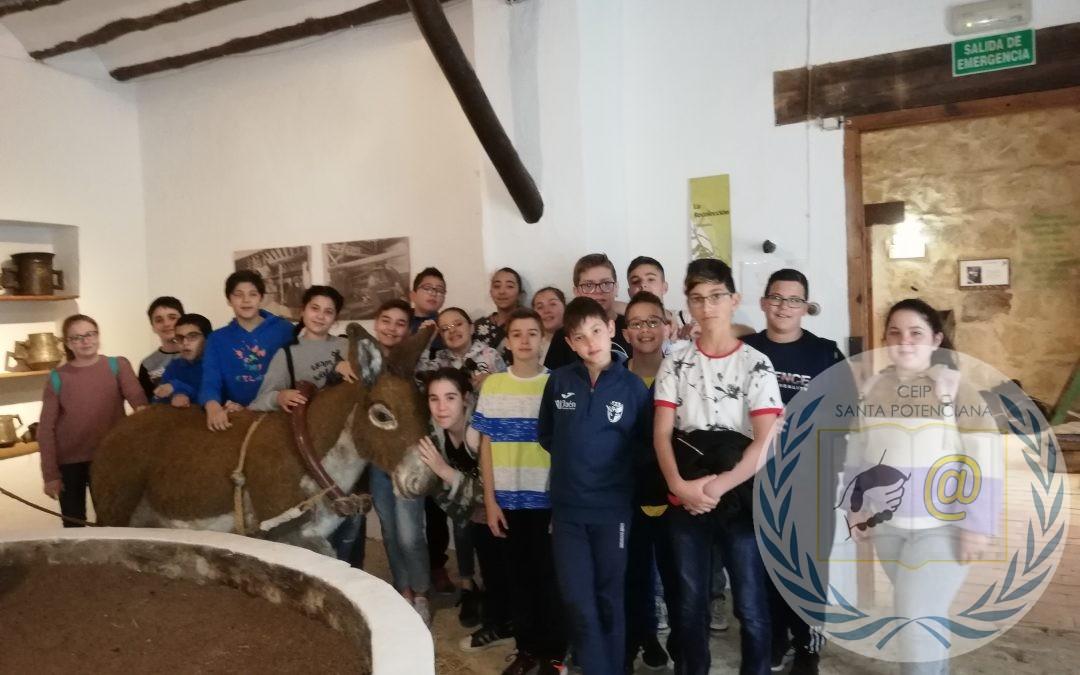 EXCURSIÓN AL MUSEO DE LA CULTURA DEL OLIVO